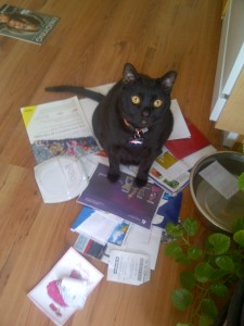 This is Mojo's way of welcoming me back after being gone almost 4 weeks...by knocking off the counter and dancing in the mail pile. Thanks buddy.